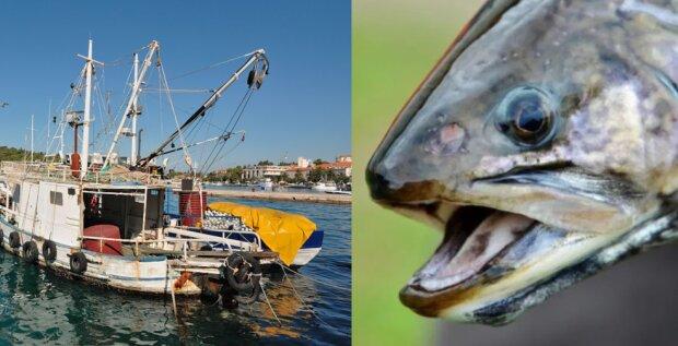 Takie historie nie zdarzają się często. Rybacy wyłowili rybę, która miała przekazać pewną wiadomość