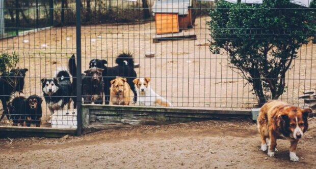 Schronisko w Kościerzynie / YouTube:  Fundacja Animalsi Schronisko w Kościerzynie