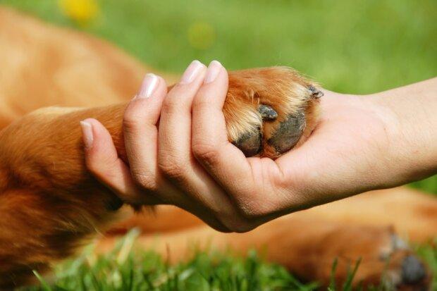 Głaskanie psa nie jest tak proste, jak się wydaje. Czy wiesz jak odpowiednio dotykać swojego pupila