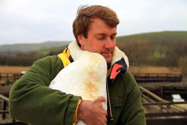Mężczyzna o ogromnym sercu uratował łabędzia. To, co zrobił ptak jest niesamowite