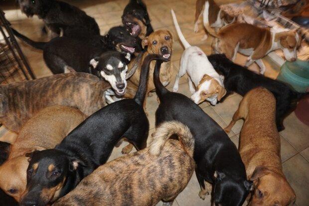 Tuż przed uderzeniem huraganu Dorian kobieta dała schronienie w swoim domu prawie stu bezdomnym psom