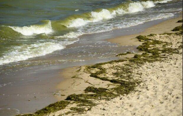 Pomorskie: kolejne zakwity sinic. Główny Inspektorat Sanitarny informuje o stanie wody