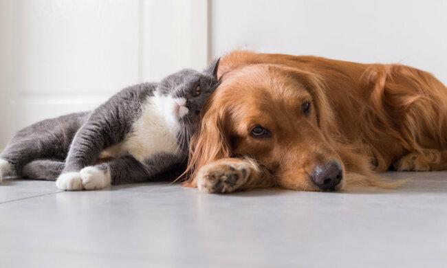 Niesamowita przyjaźń między kotem i psem. Mamy film, który pokazuje ich pierwsze wspólne chwile
