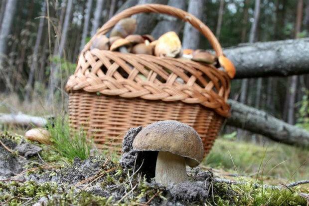 Senior na grzybach w lesie