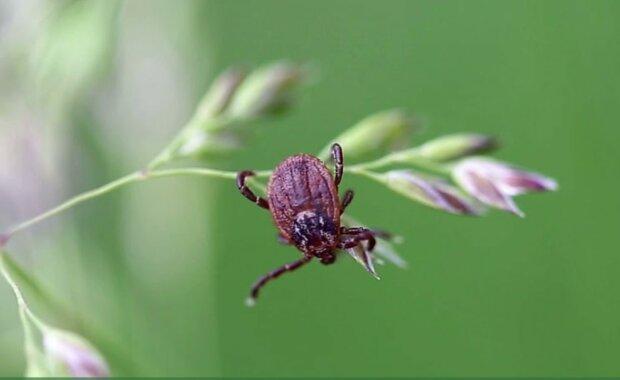 Kleszcz/Youtube @Plunkett's Pest Control