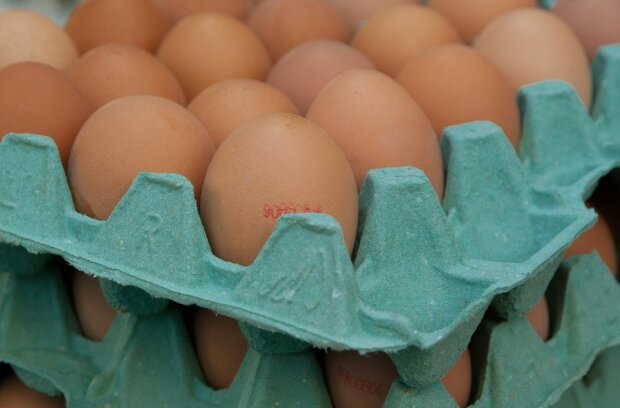 Jesienią jajka będą dużo droższe/screen Pixabay