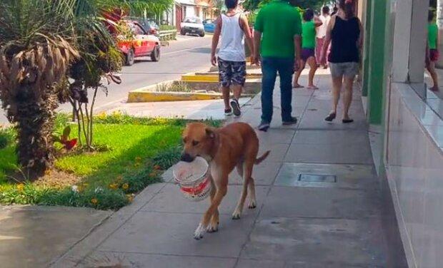 Pies był tak spragniony, że wymyślił, jak poprosić przechodniów o wodę