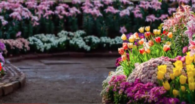 Kwiaty. Źródło: YouTube