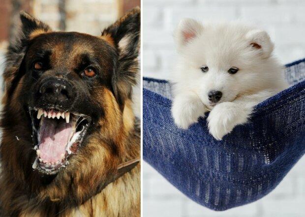 Psy to niezwykle inteligentne zwierzęta. Czy potrafią odróżnić dobrych i złych ludzi? Naukowcy rozwiewają wątpliwości