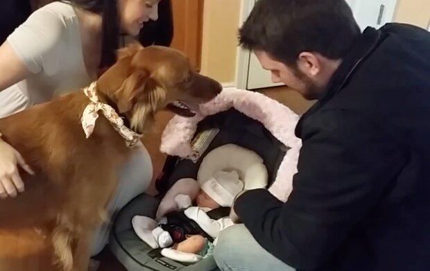 Pies po raz pierwszy widzi swoją ludzką siostrę. Wzruszające spotkanie z niemowlakiem