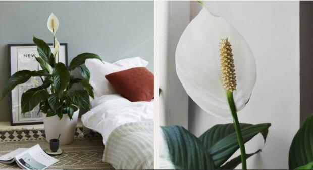 Dziesięć roślin dla idealnego mikroklimatu w domu