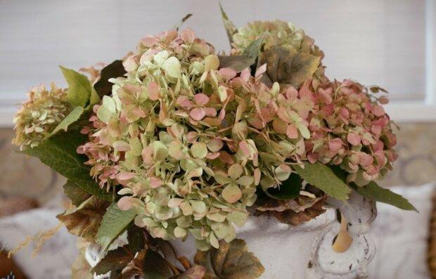 Suche rośliny/Youtube @Astar's Place
