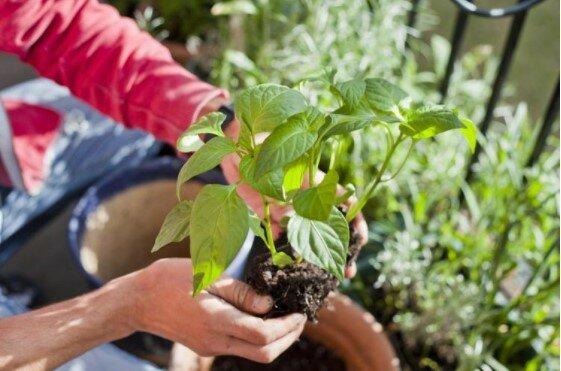 Dlaczego nadtlenek wodoru jest potrzebny roślinom domowym tak, jak potrzebne jest powietrze? Odpowiedź może zaskoczyć