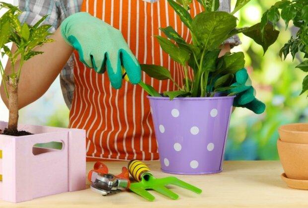 Jak dobrze pielęgnować rośliny doniczkowe. Tych błędów trzeba unikać