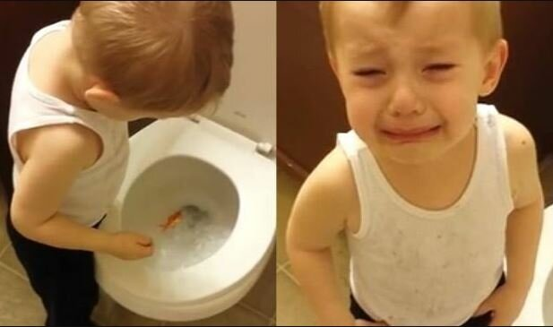To nagranie robi furorę. Wzruszony chłopiec zorganizował pożegnanie swojej ukochanej rybce