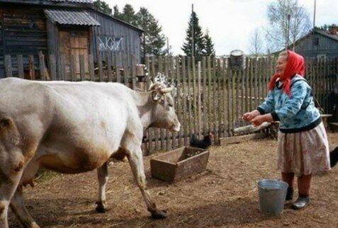 Po ślubie poszliśmy do teściowej we wsi. Poprosiła mnie o barszcz, ale nic nie mogłem zrobić