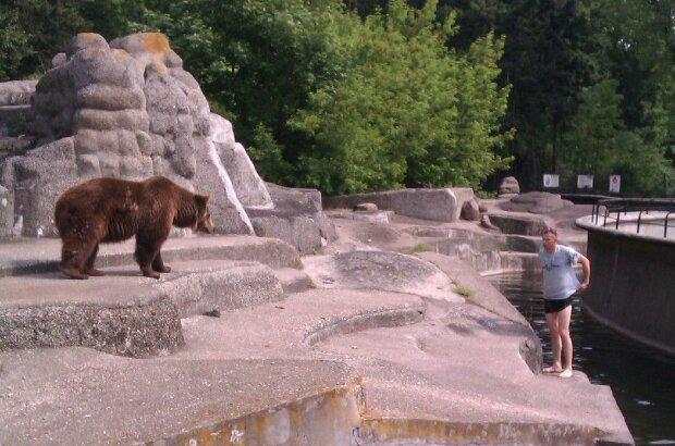 Niedźwiedzie z warszawskiego zoo zostaną przeniesione, źródło: Joe Monster